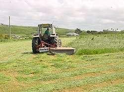 tallgrass.jpg